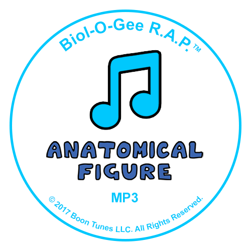 Logo of the The Anatomical Figure Audio
